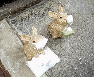 花粉症のウサギ?