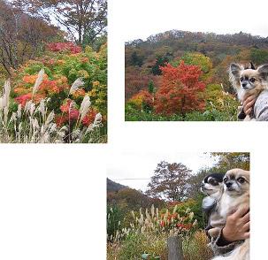 紅葉はおいしい色なのデス