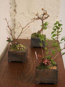 植物と花器