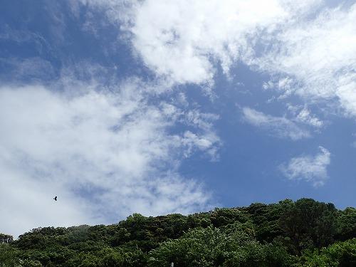 日高 ダイビング