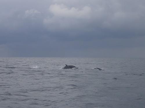 与論島 クジラスイム