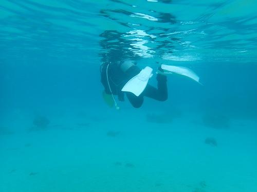 奄美 ダイビング