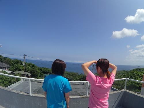 御蔵島 ドルフィンスイム
