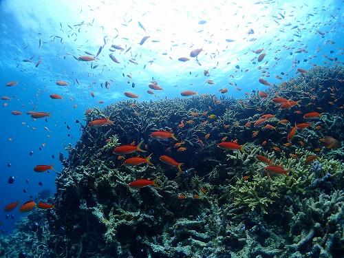 西表島 ダイビング