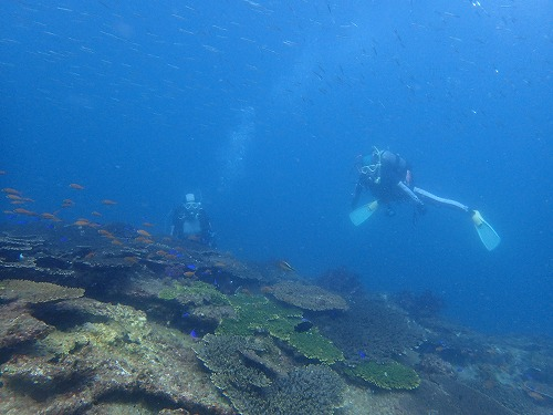 沖ノ島 ダイビング