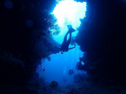 モルディブ クルーズ ダイビング