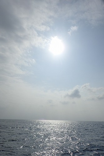 加計呂麻 クジラスイム