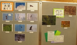 愛鳥週間企画展示