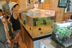 ザリガニはお魚たちのエサにします