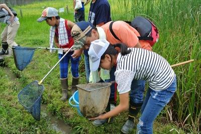 網を使って水路の魚をすくい取り観察