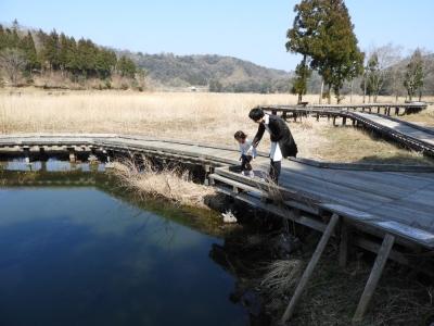 ミツガシワの池