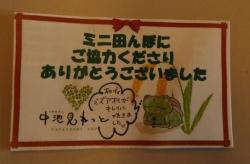 ミニ田んぼにご協力ありがとうございました