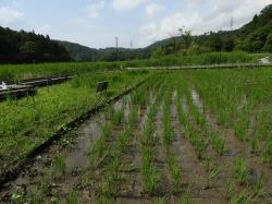 田んぼの草取り(アイシンAW工業の皆さん)