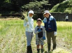 ミニ田んぼの稲刈り