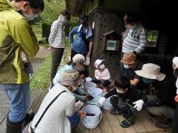 中池見の生き物探し〜カメの巻カメの記録