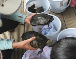 中池見の生き物探し〜カメの巻イシガメと雑種