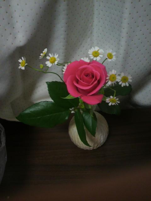 奈良市尼ヶ辻 綺麗な花