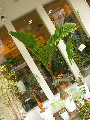 b.palm