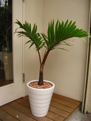 b.palm2
