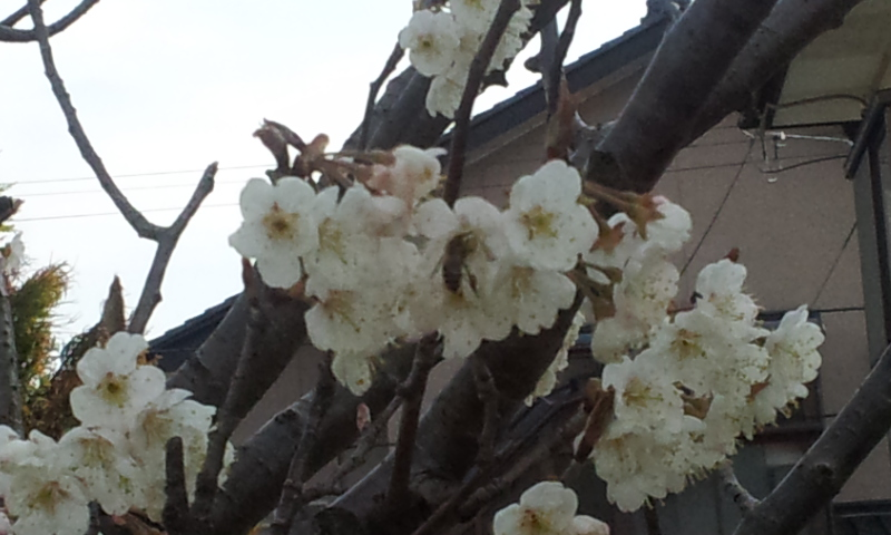 2012-03-30 14.58.10.jpg