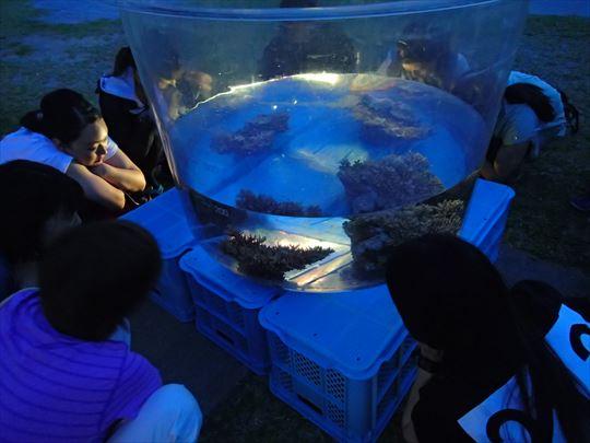 サンゴの産卵を待つ参加者の方々