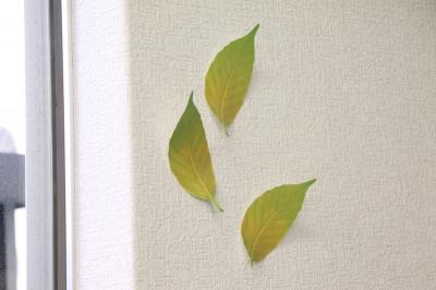 Leaf リーフ プラスディー アッシュコンセプト