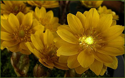 春の光輝く5