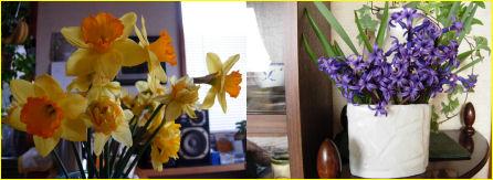 水仙の春2