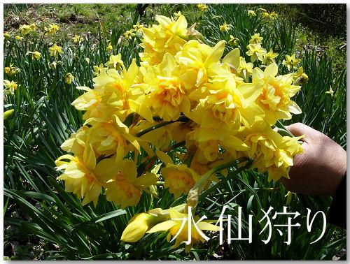 春の一日1