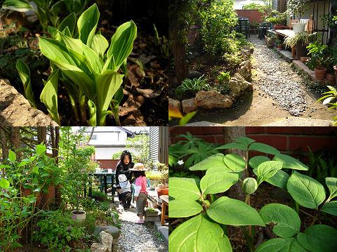 ギボウシの庭2