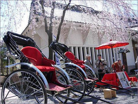 懐古園の桜3