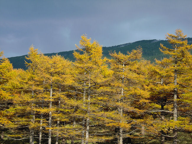 高峰高原〜カラマツの紅葉