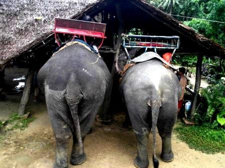 遊んでもらった象たち。