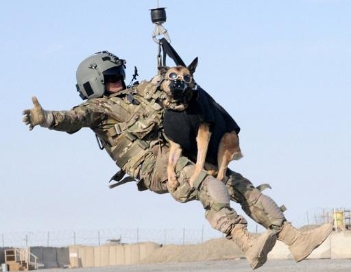 ゴーグルとベストを着用した軍用犬の空中作業訓練。.jpg