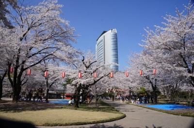 高崎市役所と桜