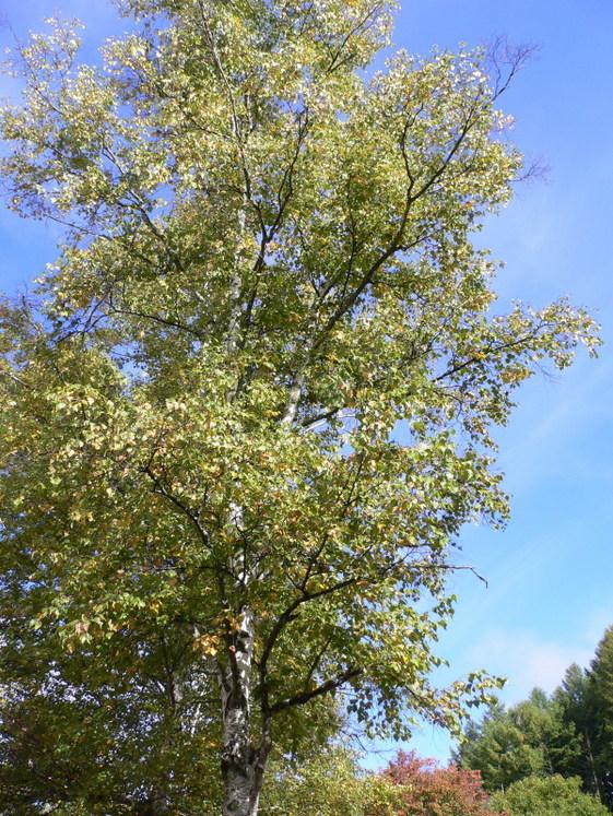 カントリーロッジ木の実