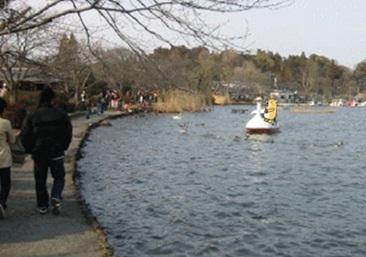 千波湖くま.jpg