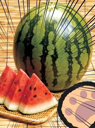 種とばし4.jpg