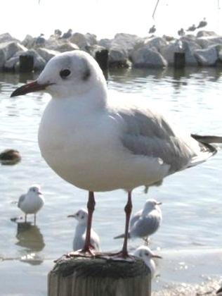 白鳥の里12.jpg