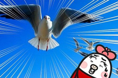 白鳥の里24.jpg