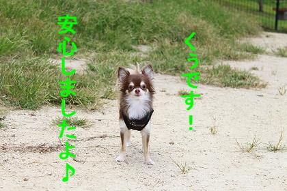 _MG_6074.jpg