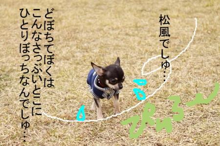 _MG_8343.jpg