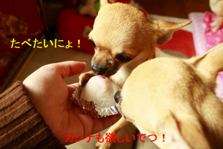 _MG_9472.jpg