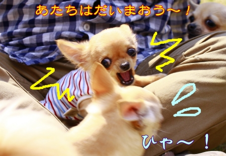 _MG_0307.jpg