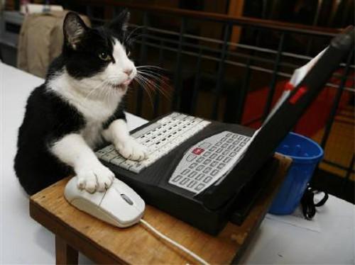 動物の噂・裏技・裏話_パソコン操作する猫