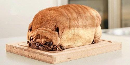 動物の噂・裏技・裏話_食パンのような犬