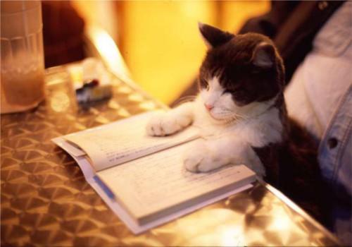 動物の噂・裏技・裏話_本を読む猫