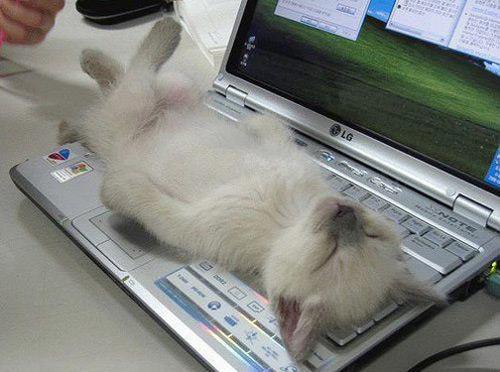 動物の噂・裏技・裏話_猫がかわい過ぎて仕事が手につかない1