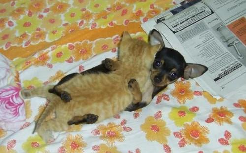 動物の噂・裏技・裏話_ハグをする犬と猫