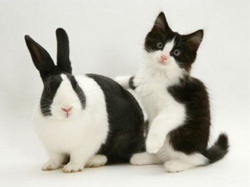 動物の噂・裏技・裏話_まるで双子のような動物1